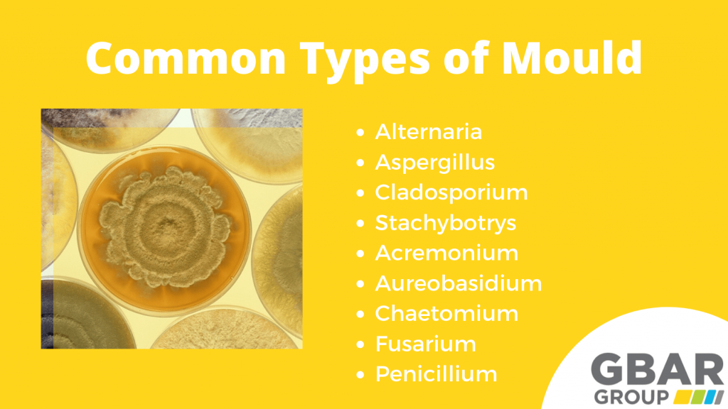common types of mould
