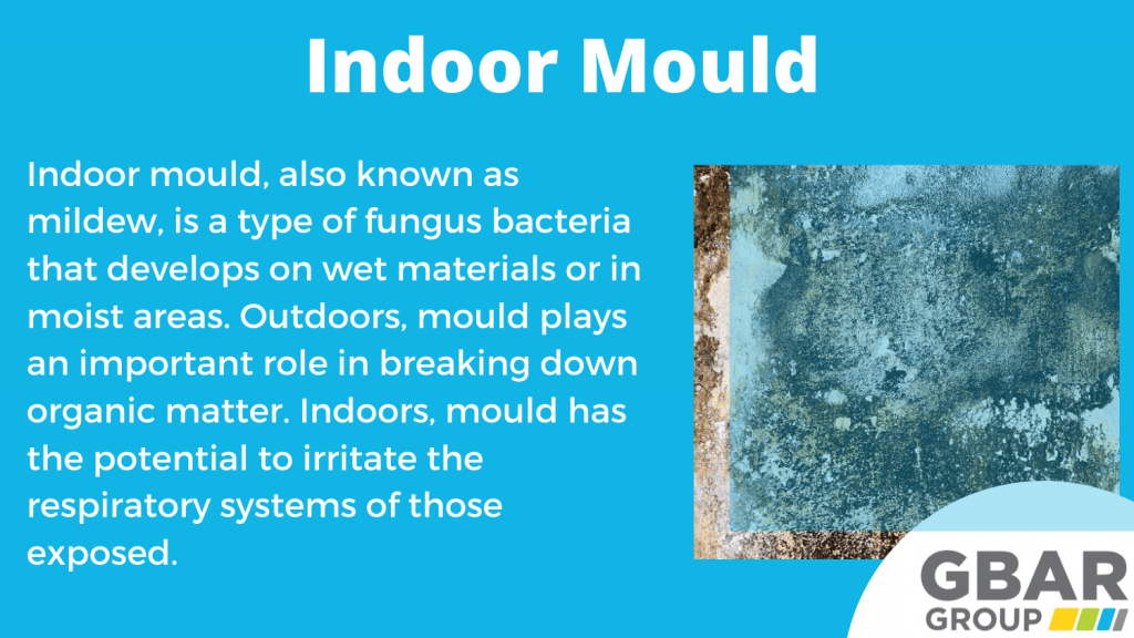indoor mould removal