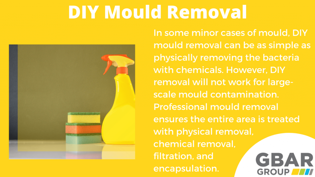 DIY mould removal