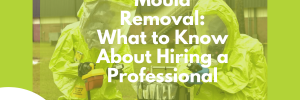 professional mould removal services