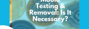 mould testing and treatment guide cover image